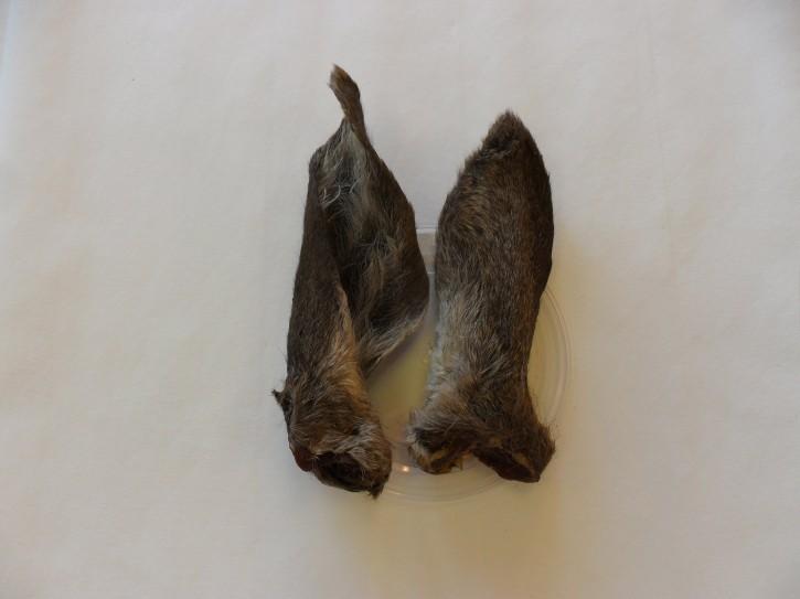 Hirsch-Ohren mit Fell, klein, 10 St